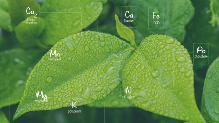 leaf-1001679 (1)-01